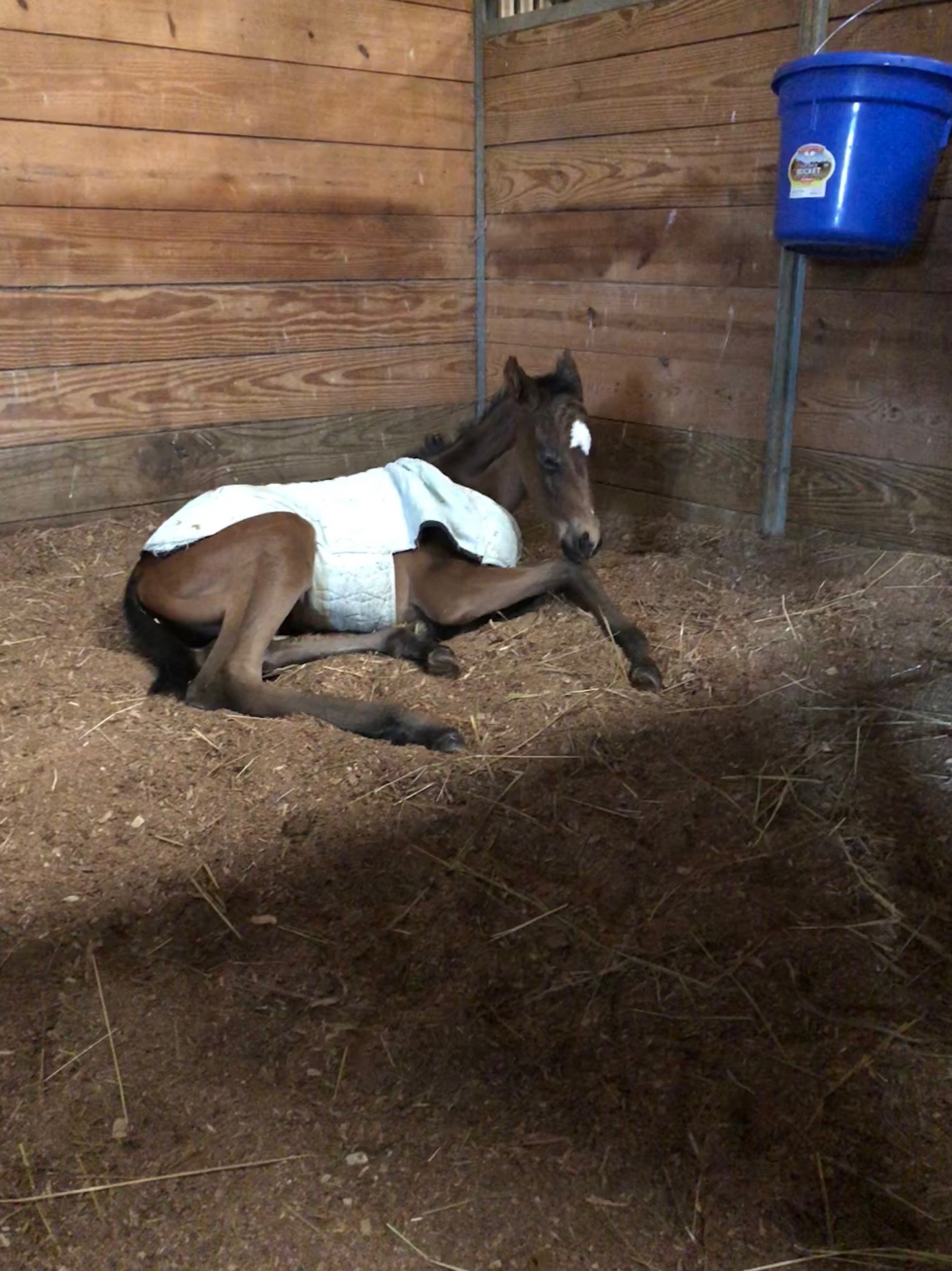 2018 filly out of My Dear Friend and by Well Said