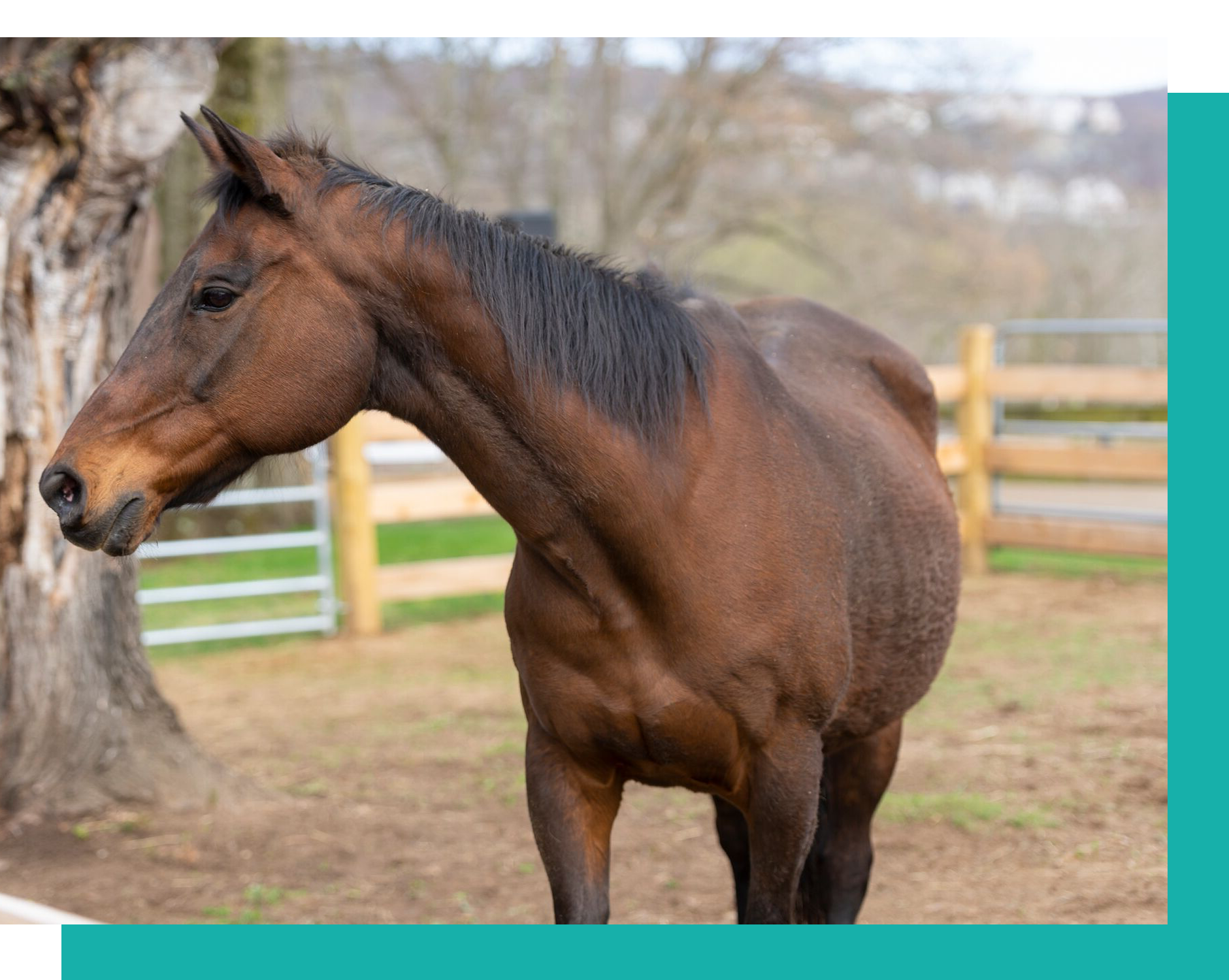 Our herd is our most valuable asset. - The cost to feed, house and care for ONE horse at Pony Power is $12,000 a year. With 22 horses, this is one of our biggest expenses.