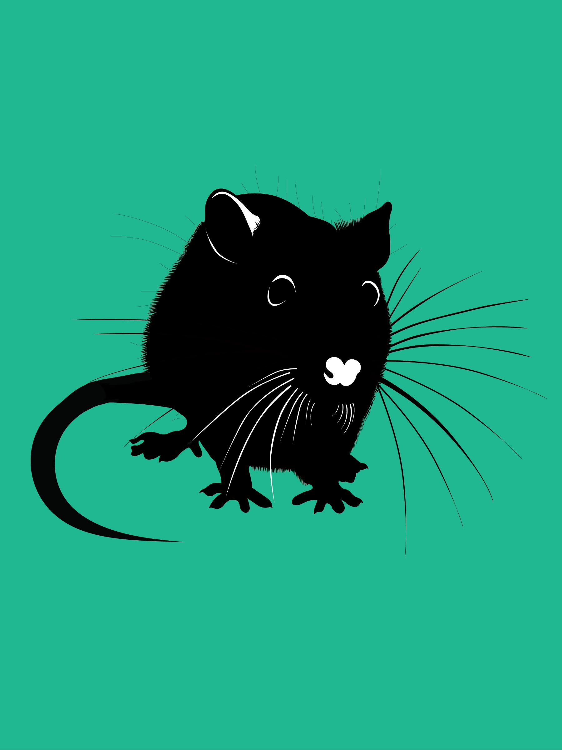 Rats-01.jpg