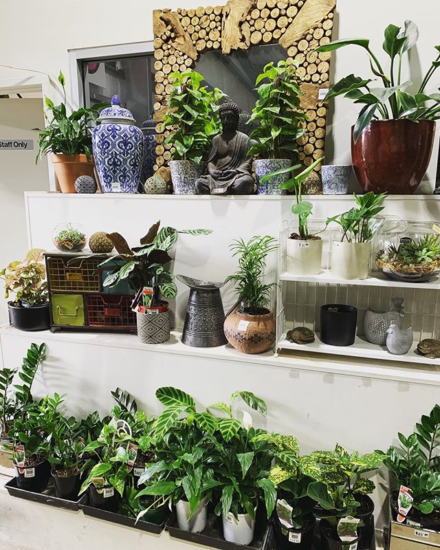 Sick of people letting you down? Over human interaction? Or perhaps you're forever alone...try something that won't disappoint, indoor plants. 🌿🌱🌳