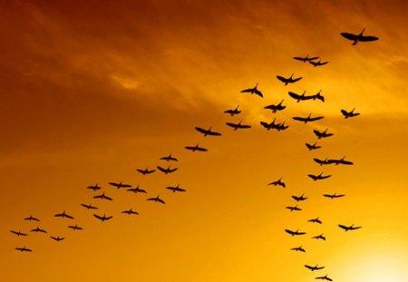 v formation sunset.jpg