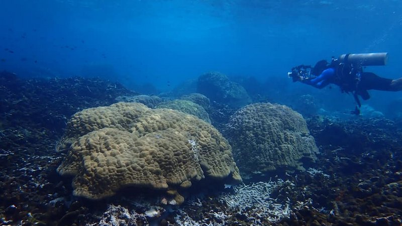 Surin Islands bleached corals nearly fully recovered