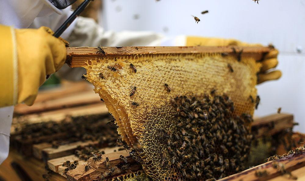 kenyan bee comb.jpg