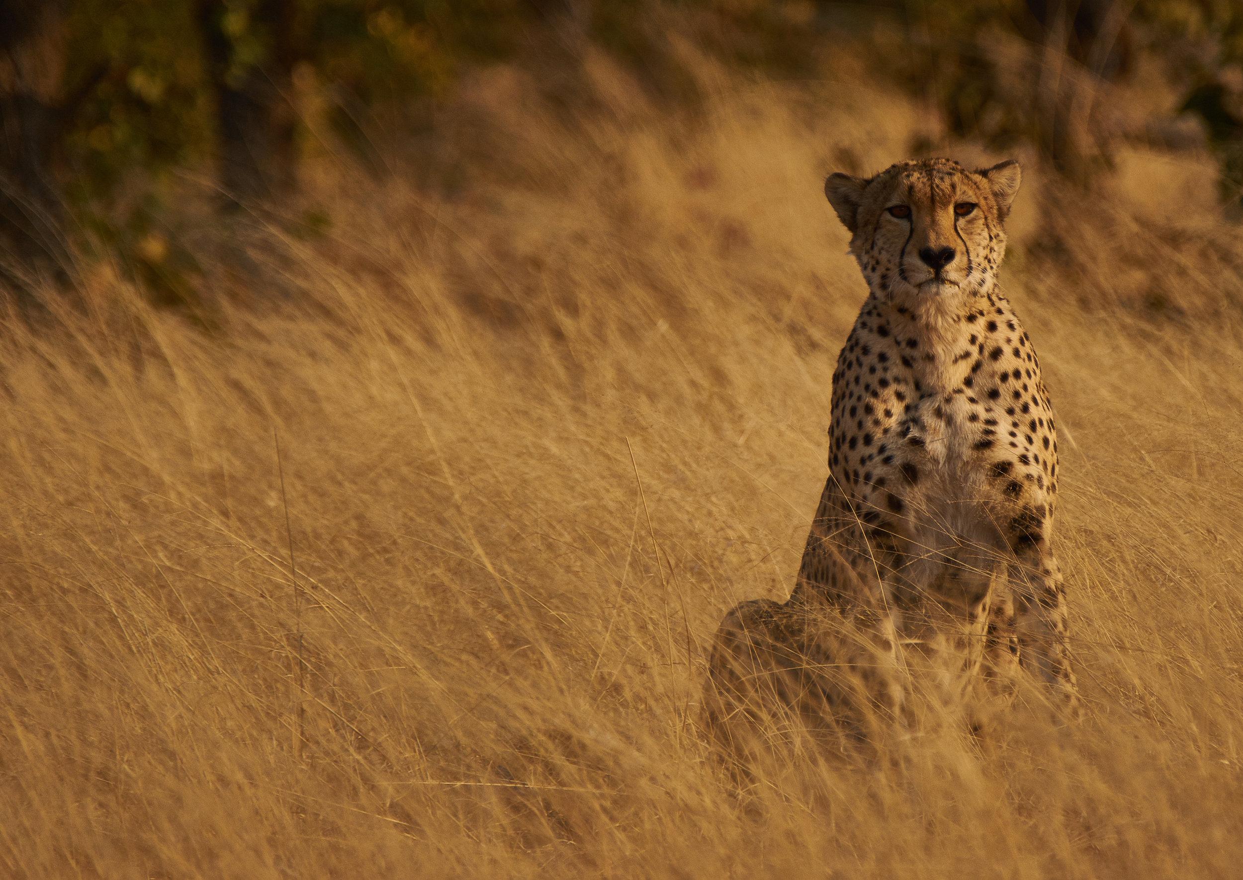 - Safari In Zimbabwe