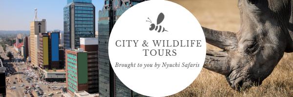 Nyuchi Safari Banner.png