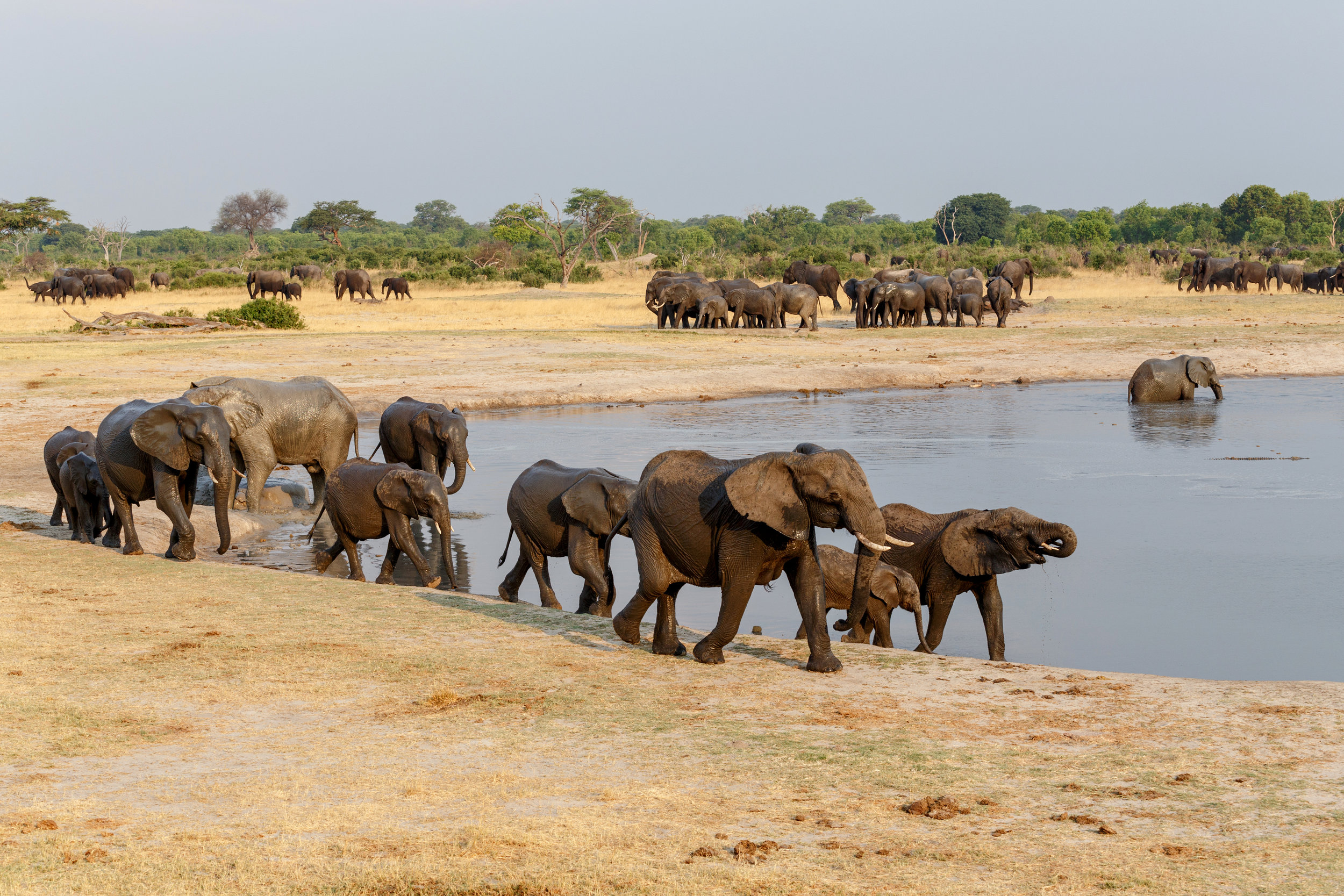 - Start Planning your safari