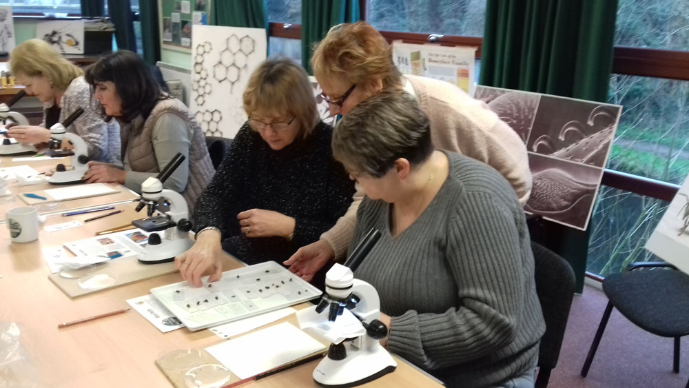 Participants take part in the Beyondness of Bees Workshops
