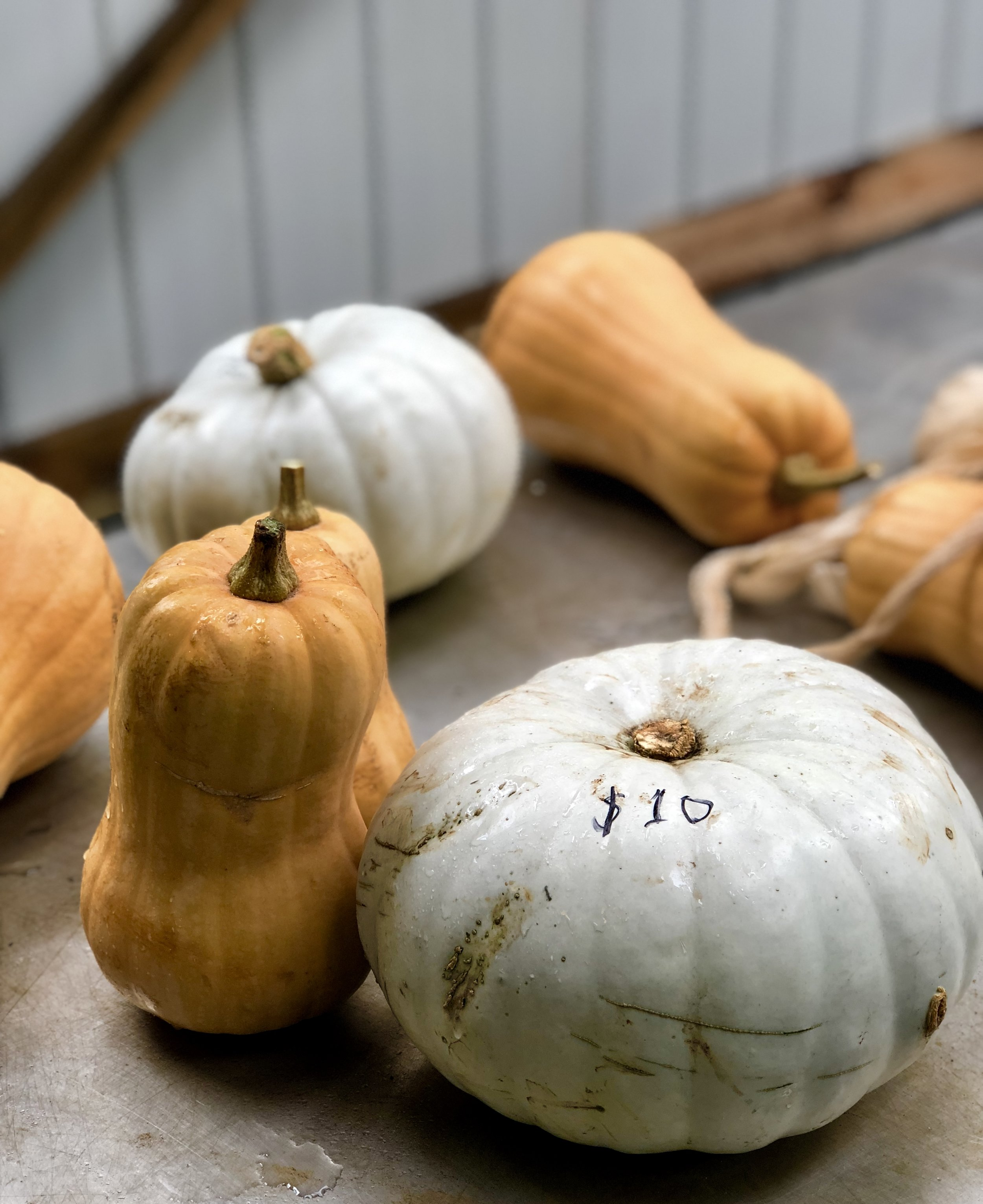MUNCH ON THE EAST COAST - The East Coast showcases some of Tasmania's best fruit and vegetables.