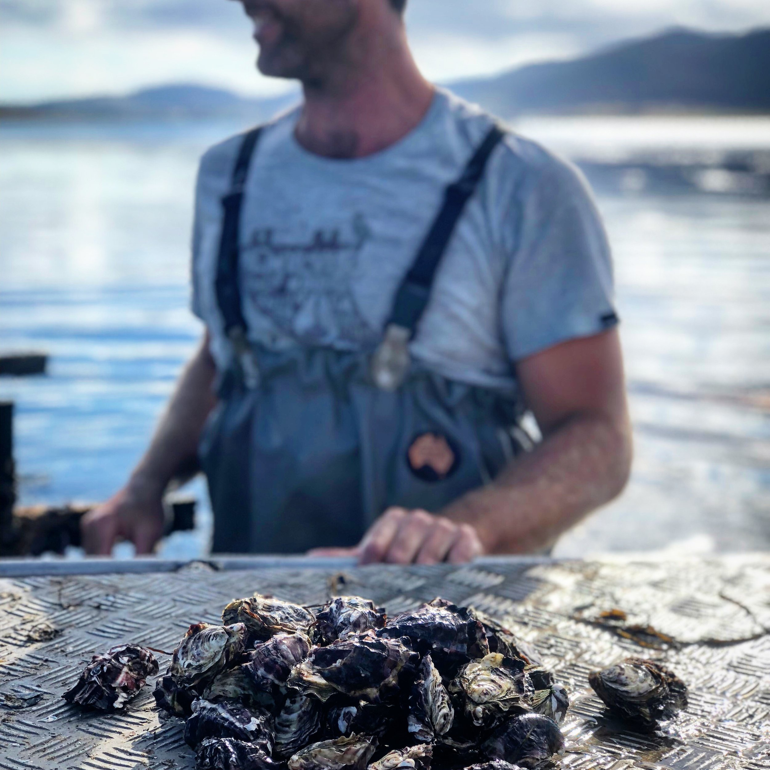 MUNCH ON HOBART AND THE SOUTH - The finest oysters, best restaurants and small growers.