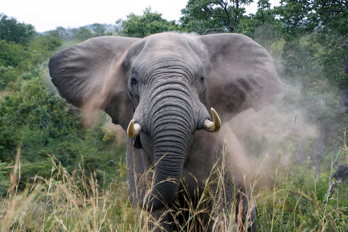 travel-bugz-elephant-web.jpg