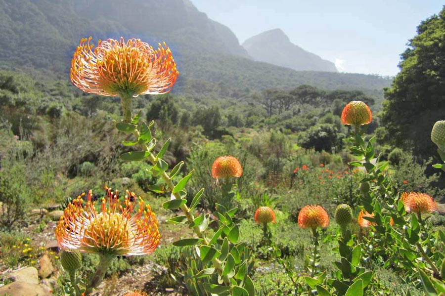 travel-bugz-fynbos-web.jpg