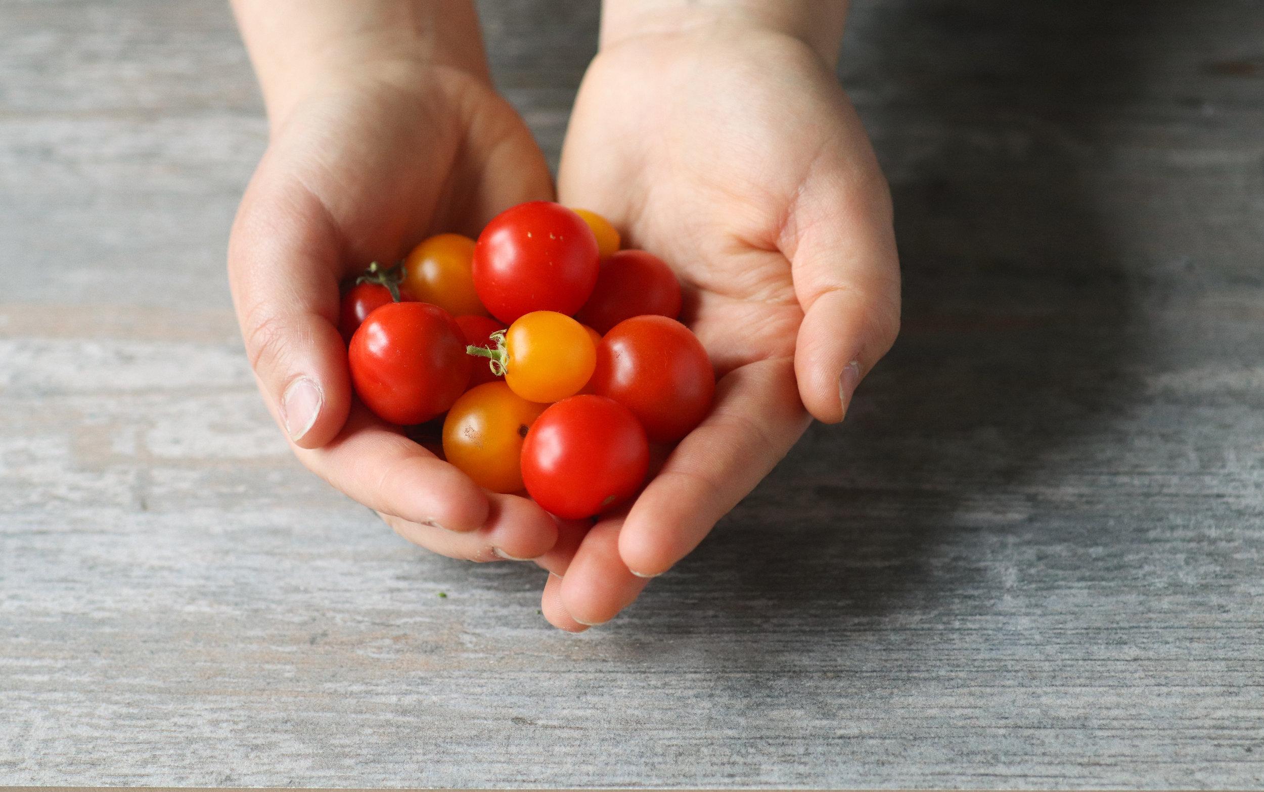 fresh tomatoes, tomatoes, cherry tomoatoes, vegan, gluten free, summer quinoa salad, quinoa salad, fresh produce, fresh salad