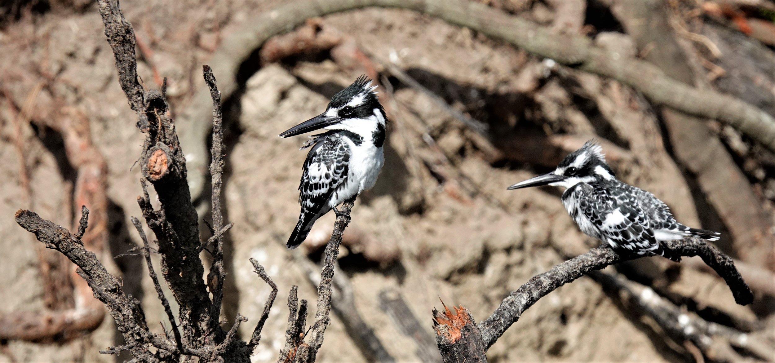 Setari Camp Botswana Birds.jpg