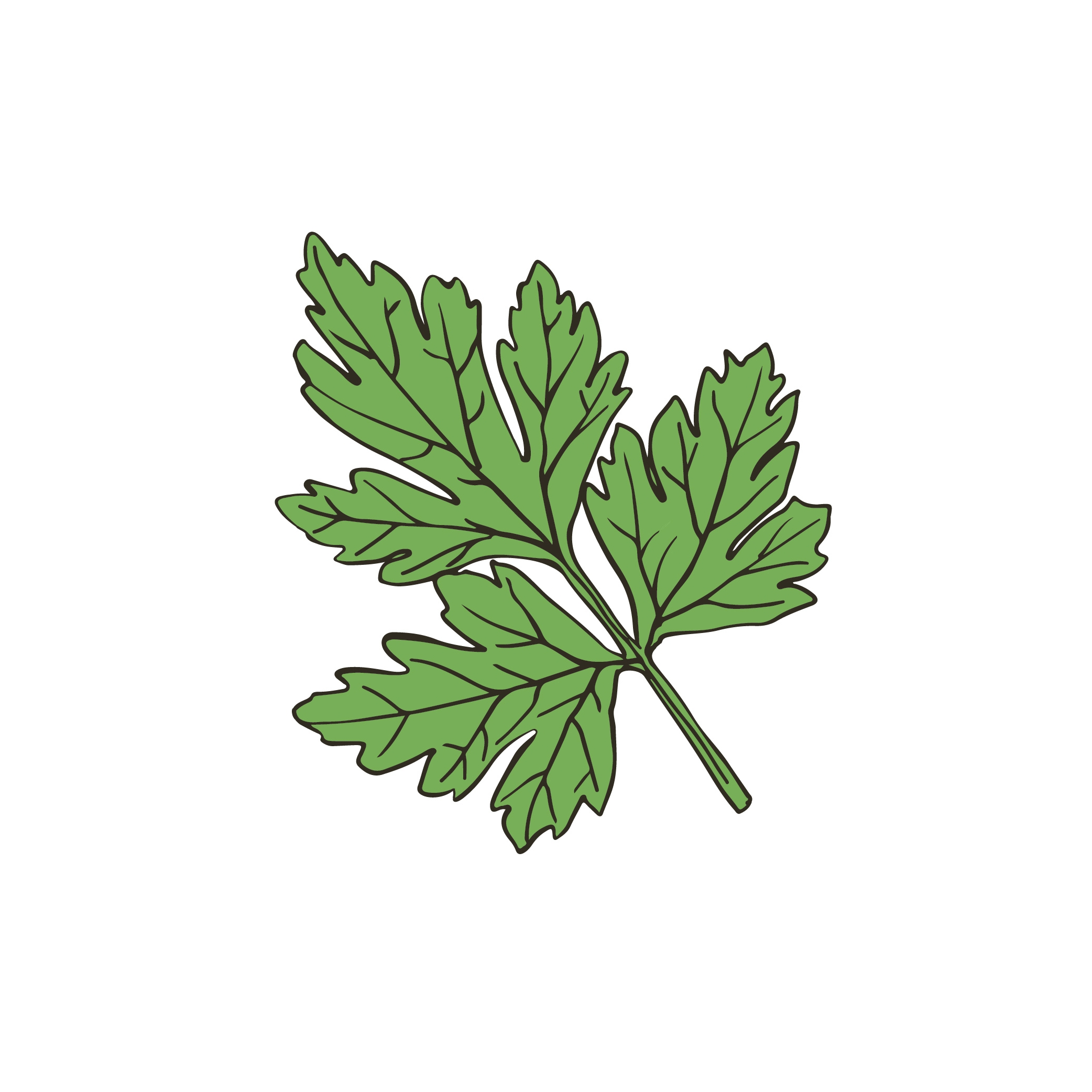 Reedlab illustration_cilantro.jpg