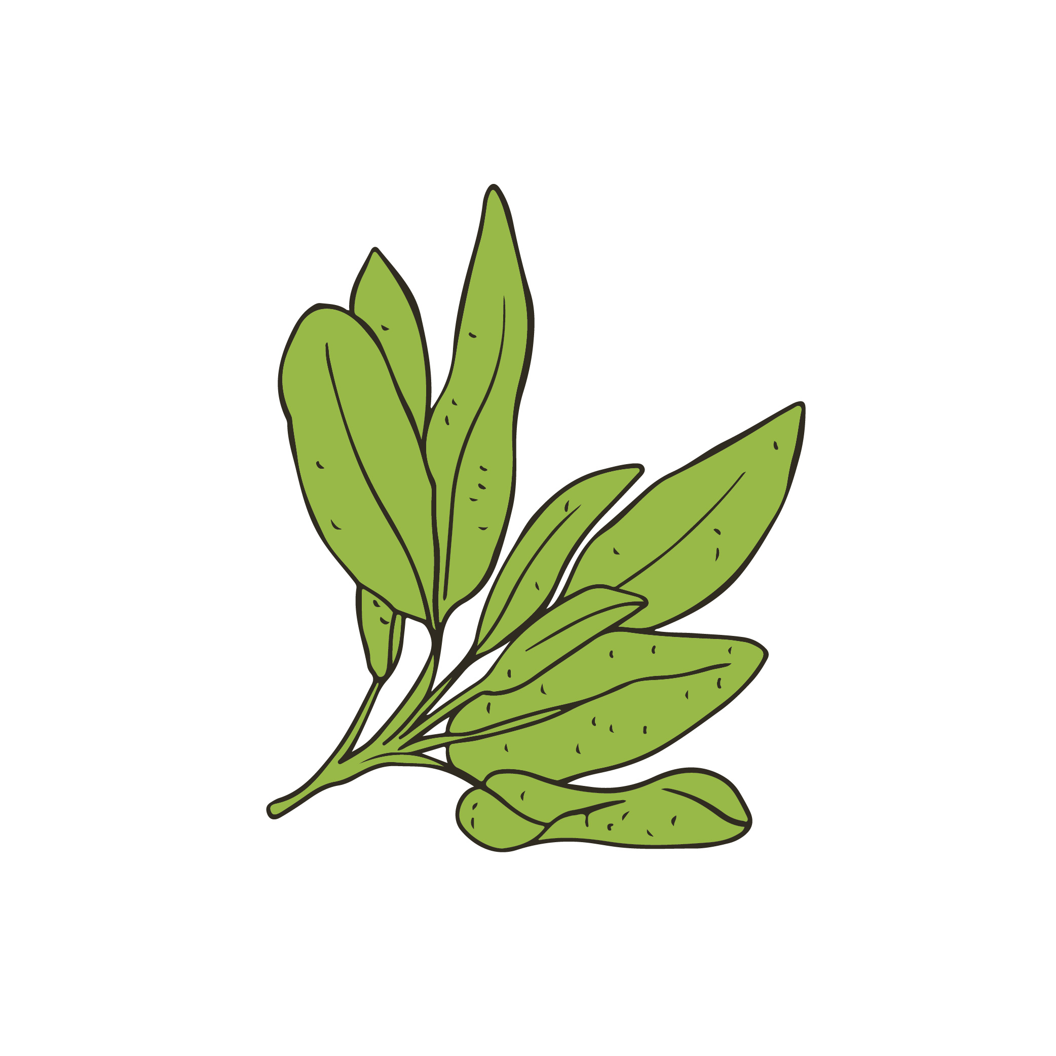 Reedlab illustration_sage.jpg