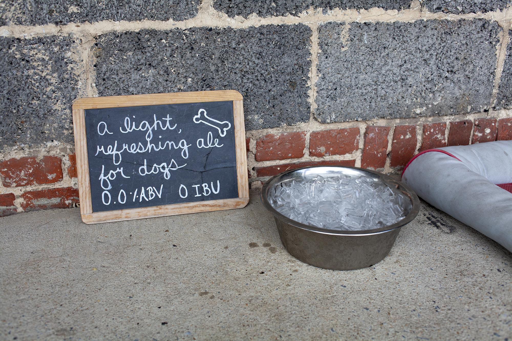 Hazel-Dog-Deck-8-web.jpg