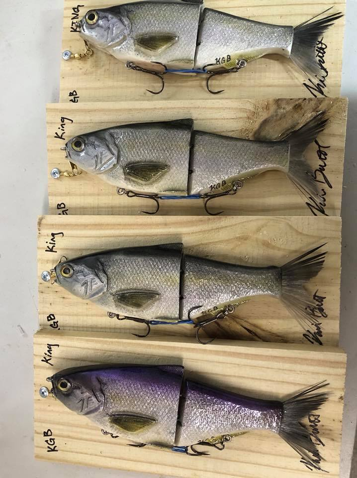 "A Batch of ""King Shad"" ready to find their new home"