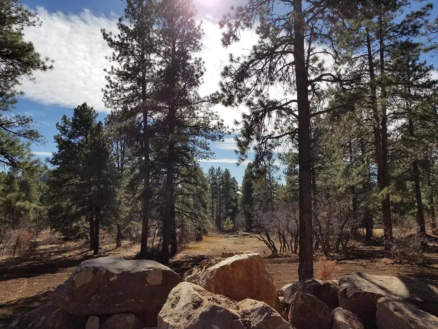 73 Engine Creek Trail -