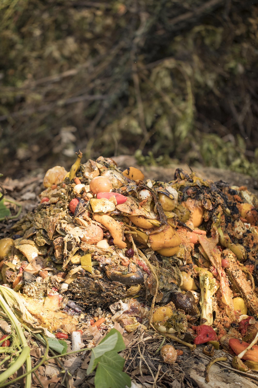 Compost Fairy_46A4730.jpg