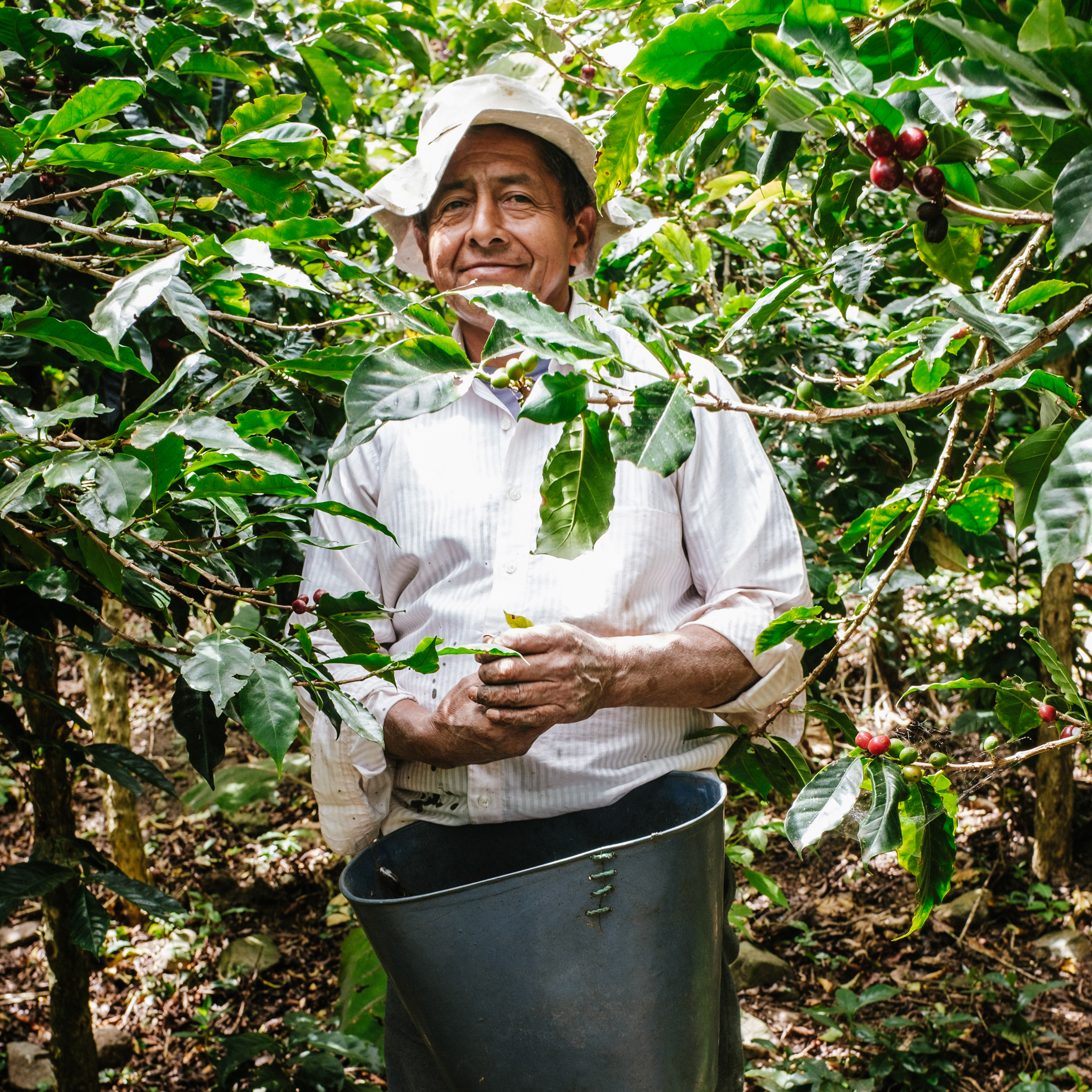 Colombia Argcafe - Deep in the Andean foothills of Colombia's Cauca Department lies Argcafe Growers Association, made up of 102 farmers that give us great structured citrus acidity and a clean finish.
