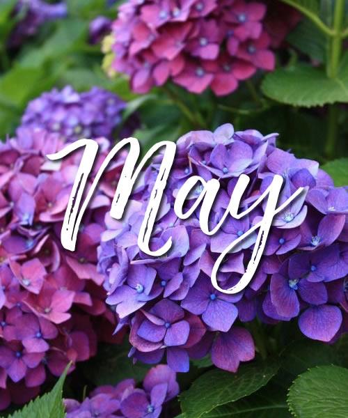 NW may.jpg