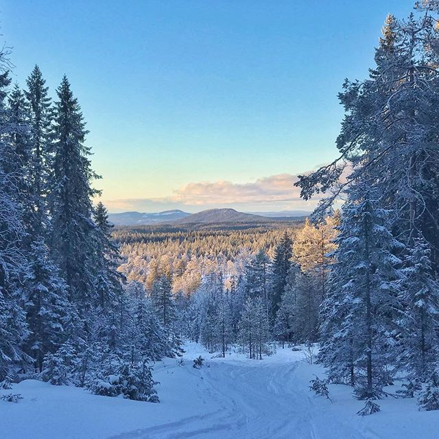 A glimpse on one of the beautiful views the trail to our overnight cabin has to offer. Deep in these woods stands the cabin that has been there since 1865.  #belowzerohuskytours #winter #dalarna #falun #visitsweden #visitdalarna #picoftheday #naturephotography #adventuretime #snow #traveleurope #scandinavia #sweden
