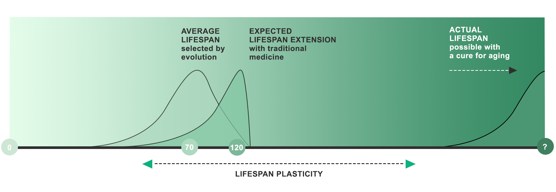 Figure 2.  The traditional theory that evolution selects for the longest possible life leads biologists to think that lifespans are inherently limited to the ones we have today. In this view, aging cannot be stopped and lives can be extended only to about 120 years. The new understanding that evolution selects for shorter lifespans implies that aging is a mechanism for limiting lifespans which can be changed. Aging as we experience it is unnecessary, and can be postponed until the actual intrinsic lifespan limit is reached.