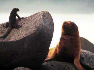iguana+seal.jpg