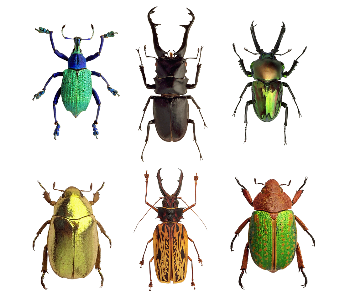 beetles.png