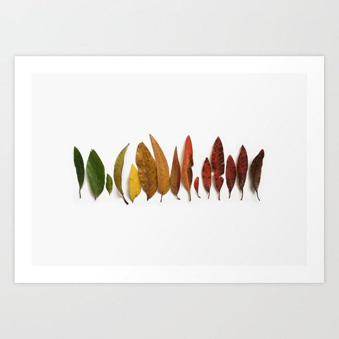 Australian Leaves Print