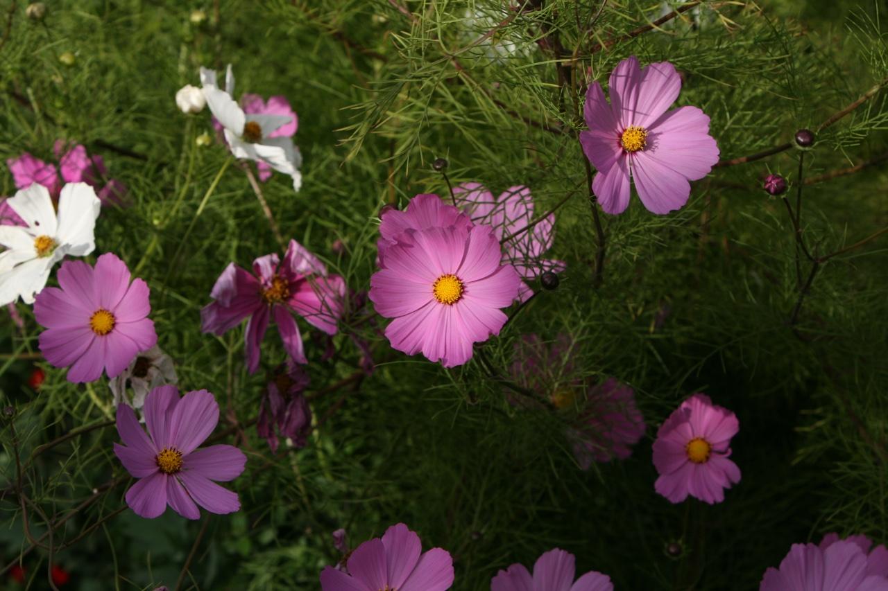 Flowers 2013.jpeg