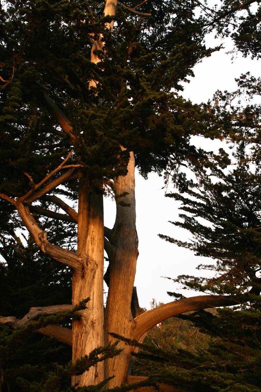 Cypress lighten it 2013.jpeg