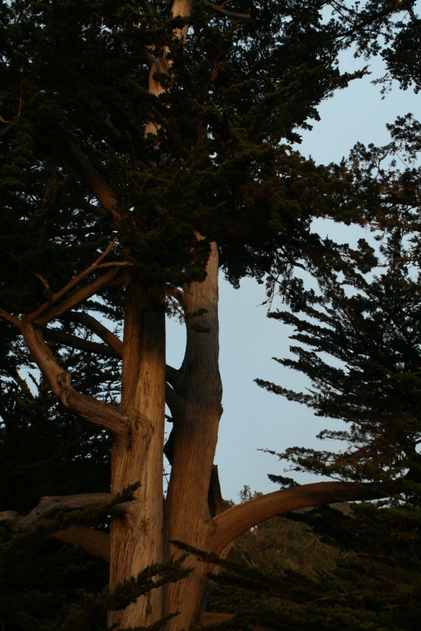 THROUGHOUR OWN EYESRETREAT (TOOER V13.0)Telling Our Stories: Speaking Our Truths - September 22-27, 2019 Institute, Big Sur, CA