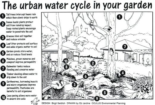 water-cycle-in-garden-1.jpg