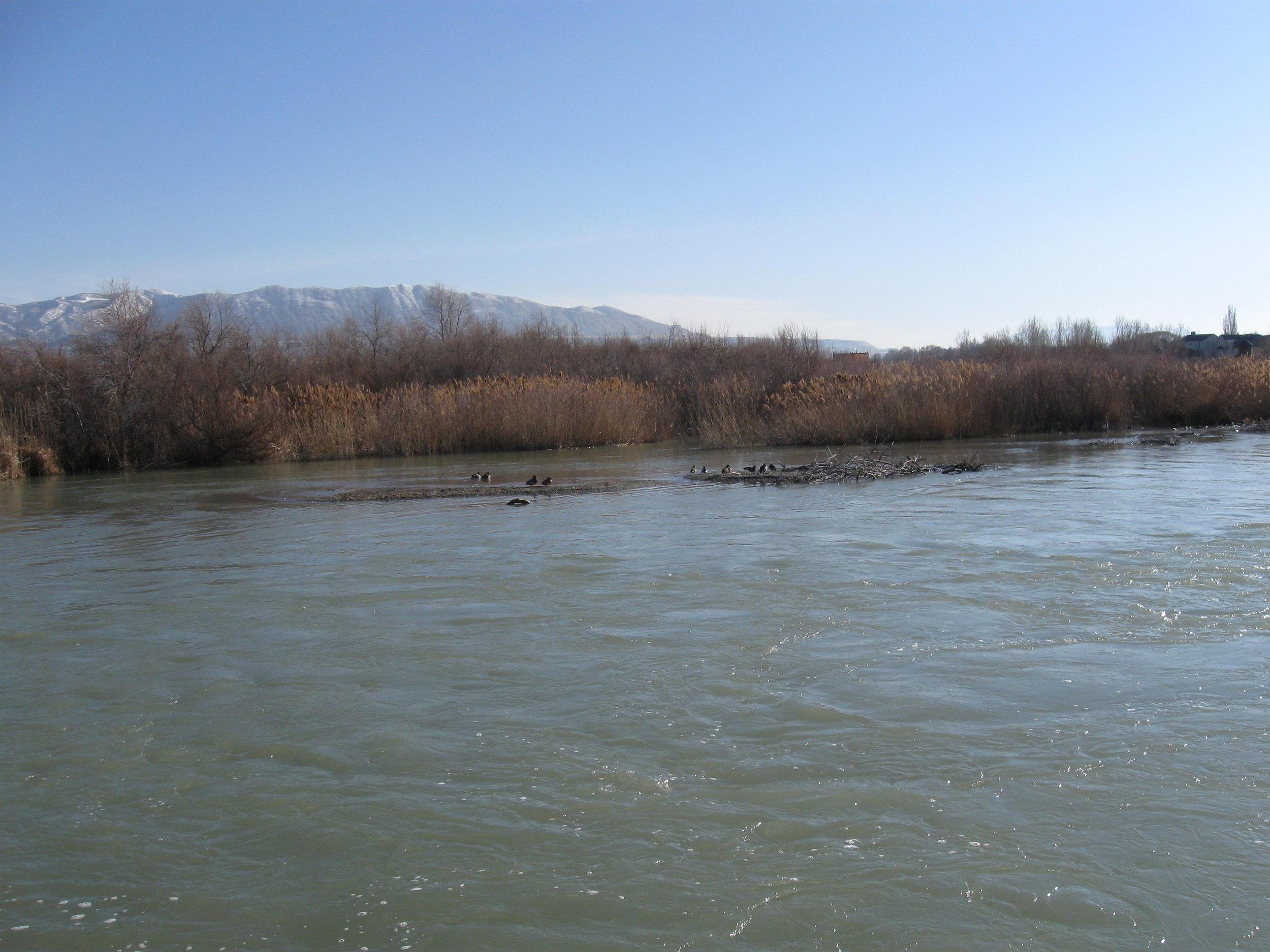 Jordan River+reeds on shoreline.JPG