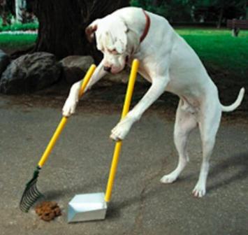 dog scooping poop.png