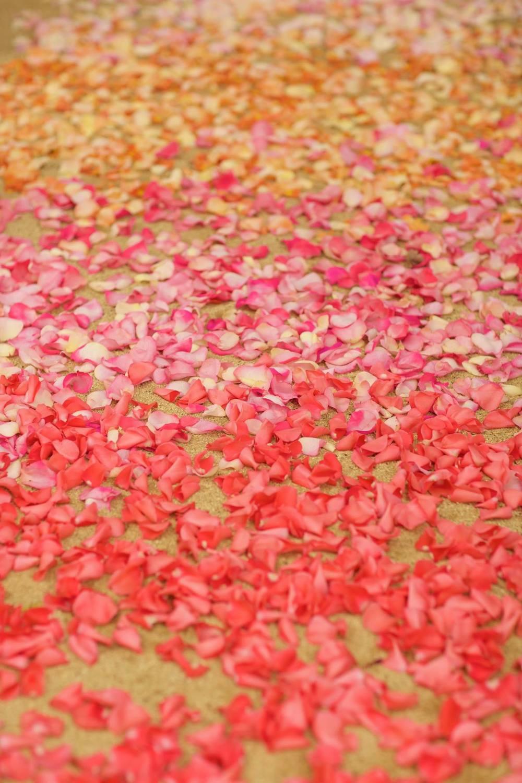 pink petal aisle.jpg