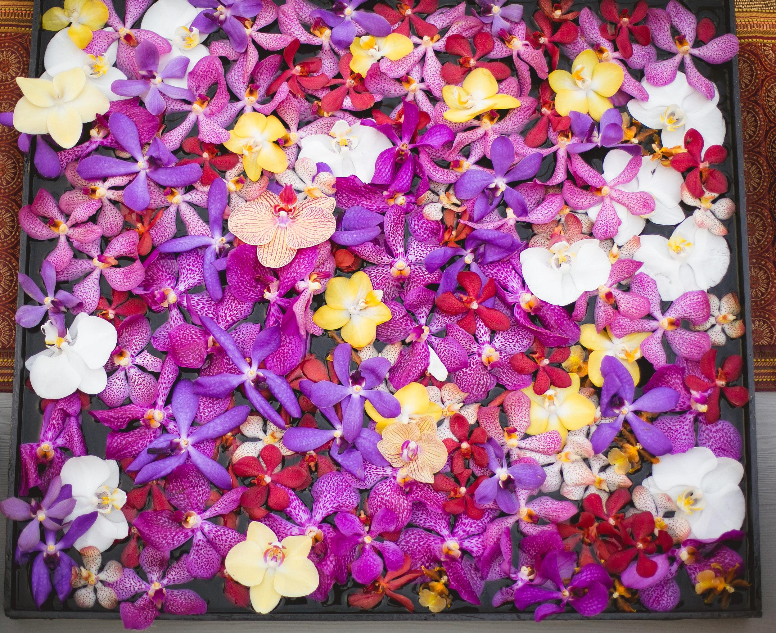 purple orchids.jpg