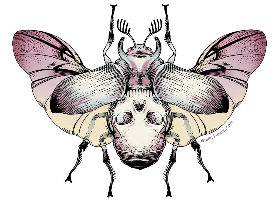 black-angel-beetle.jpg