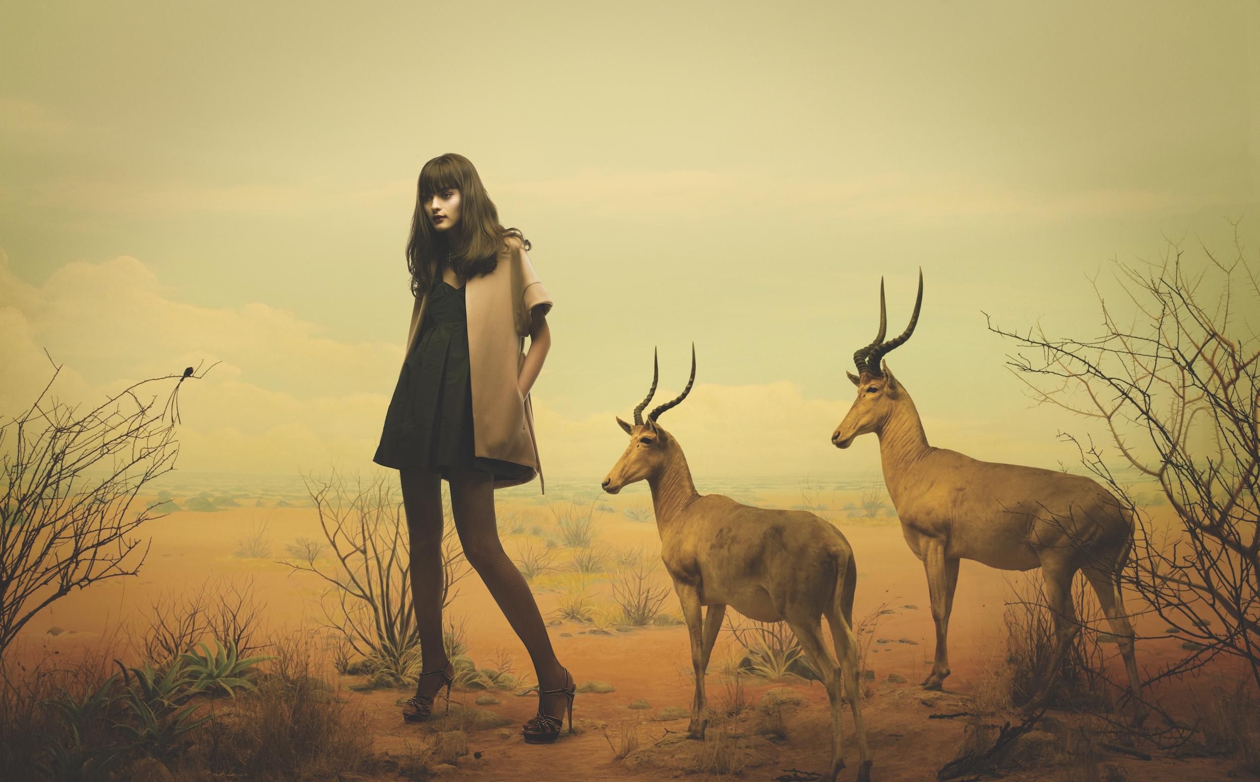 Dioramas_Antilope_Final.jpg