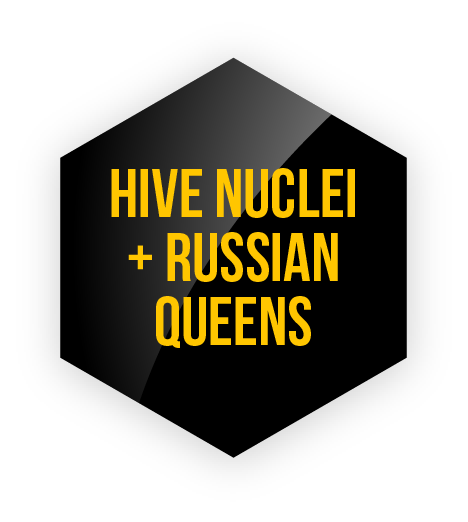 HiveNuclei_RussianQueens.png