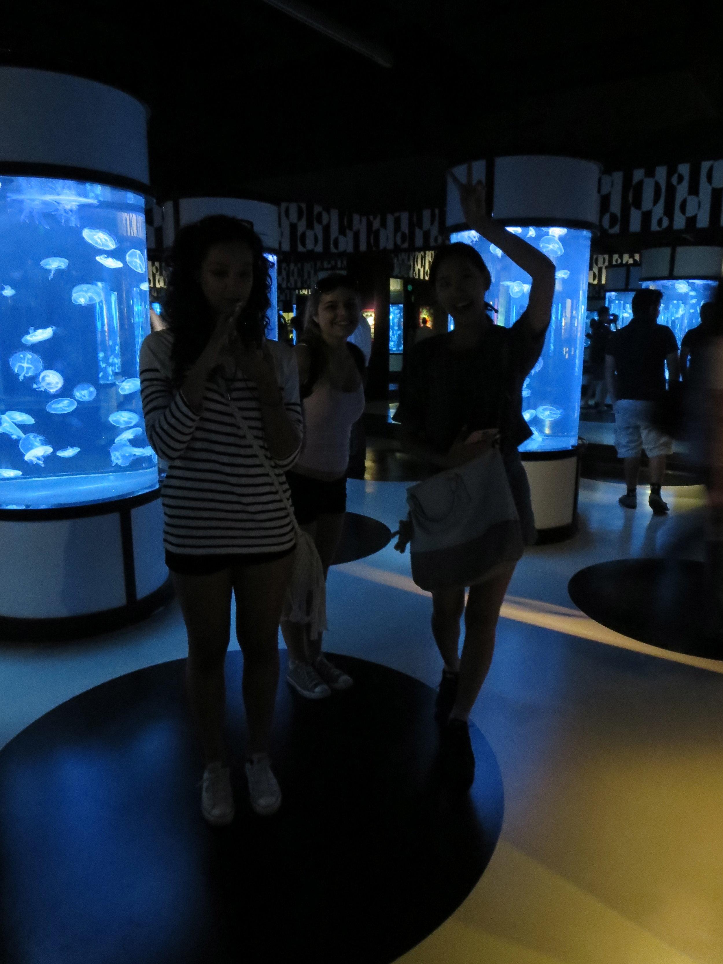 montery bay, aquarium, california.jpg