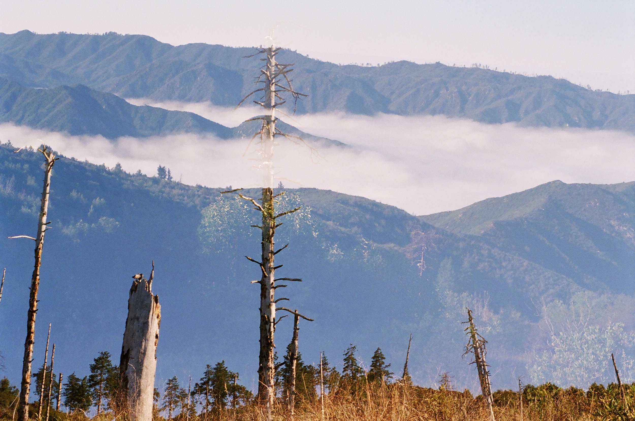 Pine Ridge  – 35mm double exposure