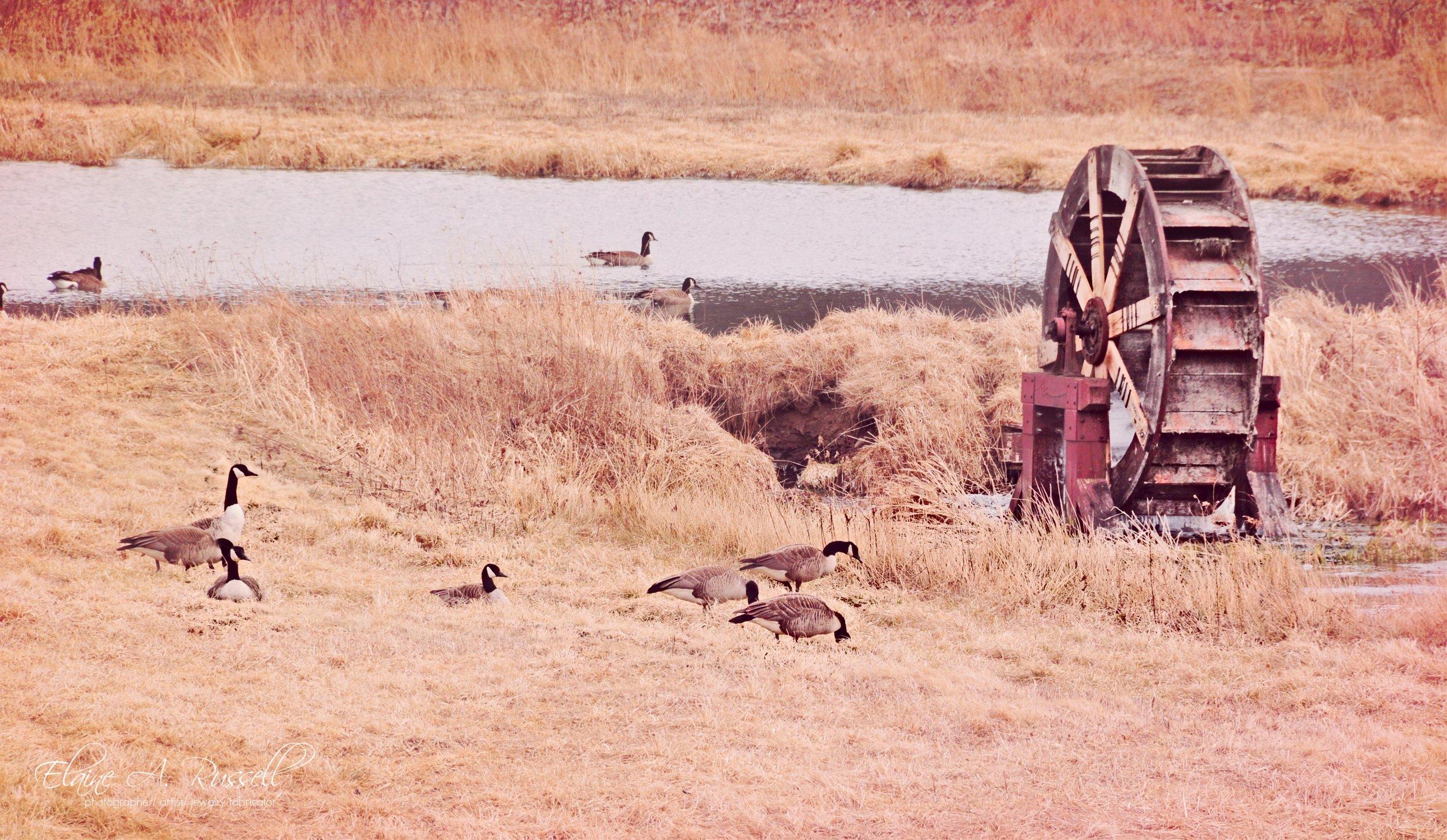 wagonwheel2.jpg