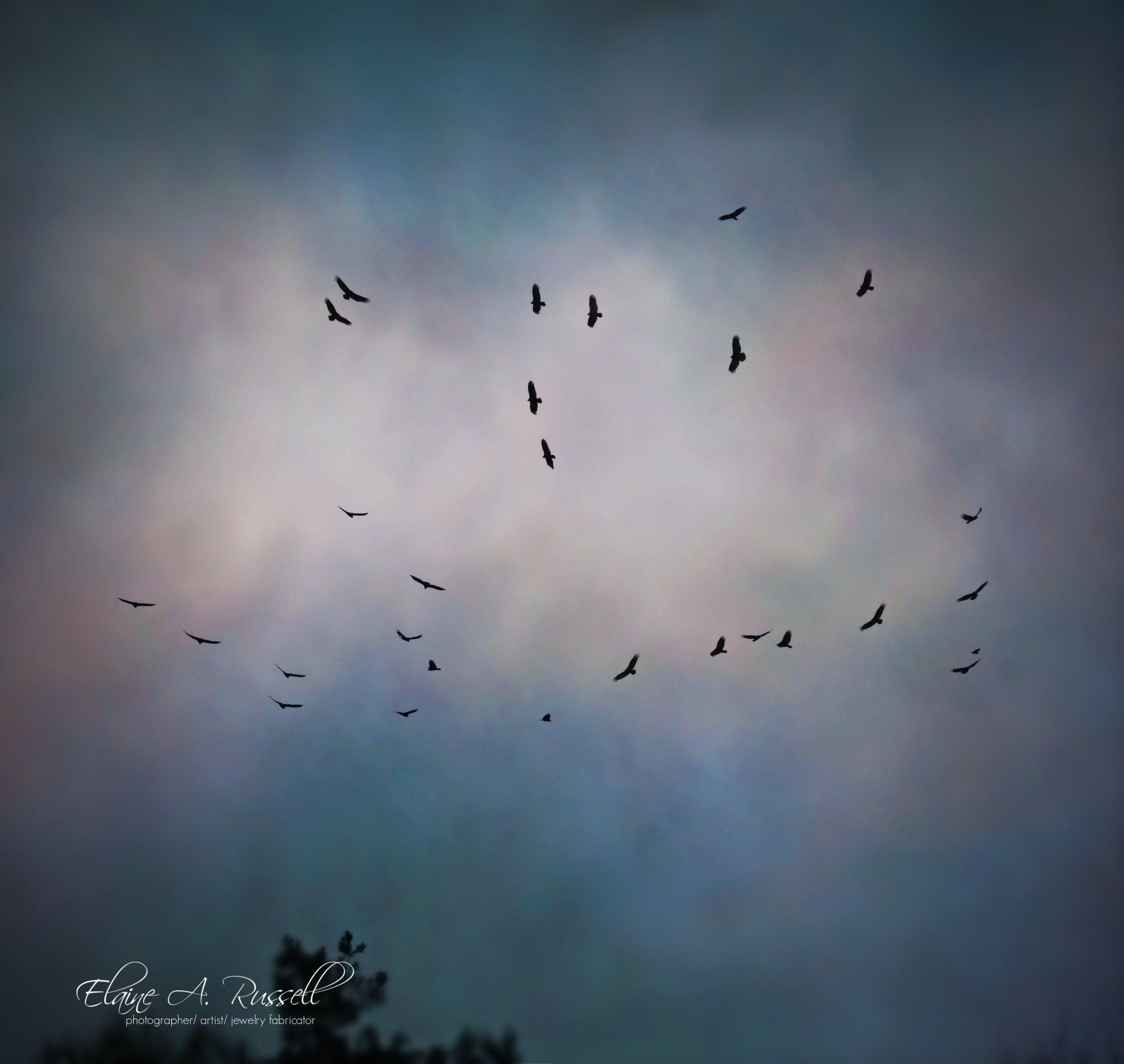 Vultures2.jpg