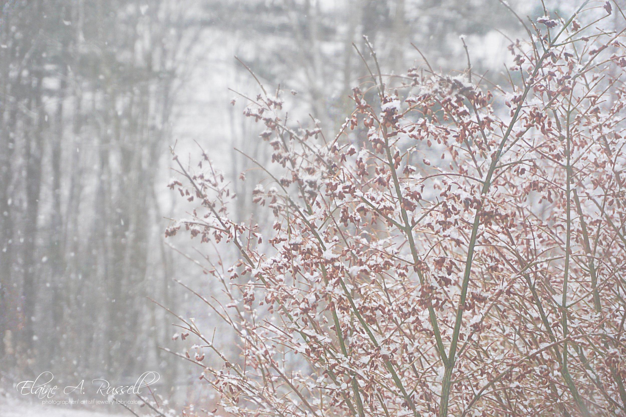 WinterBush2.jpg
