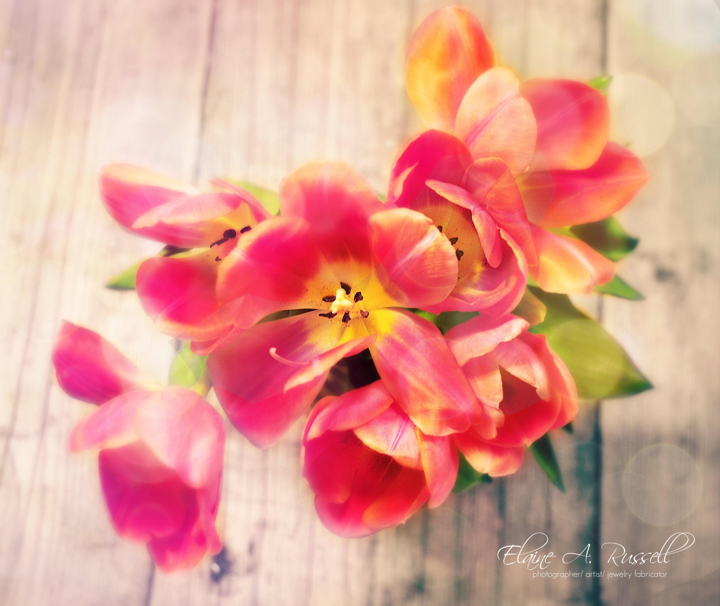 Tulips-color2-2.jpg