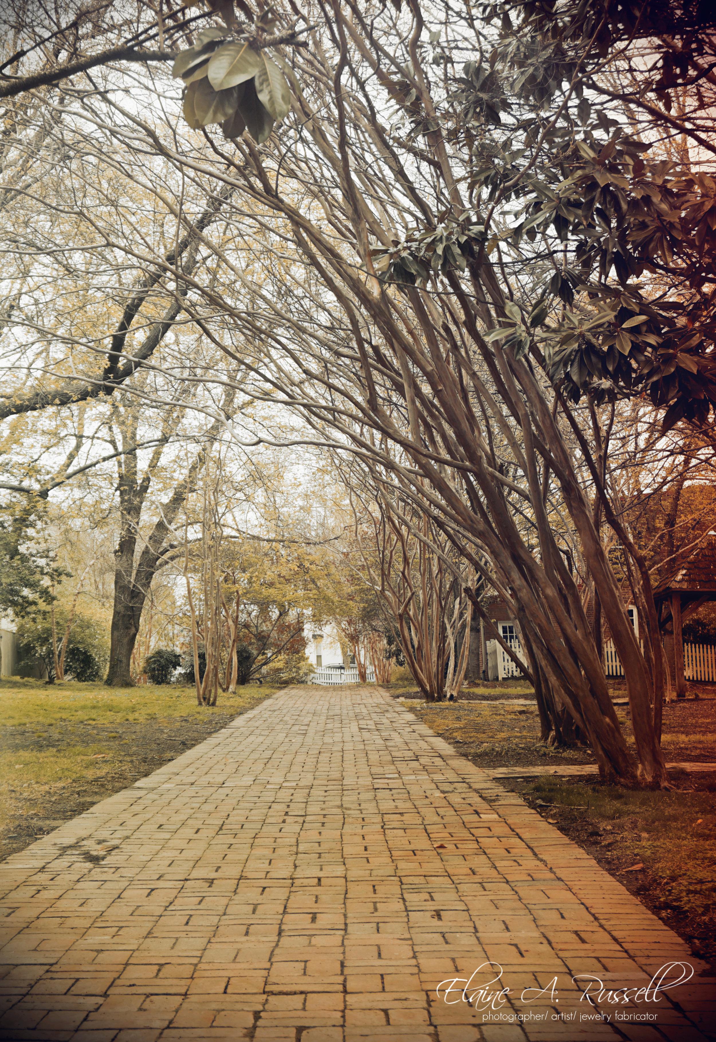 trees22.jpg
