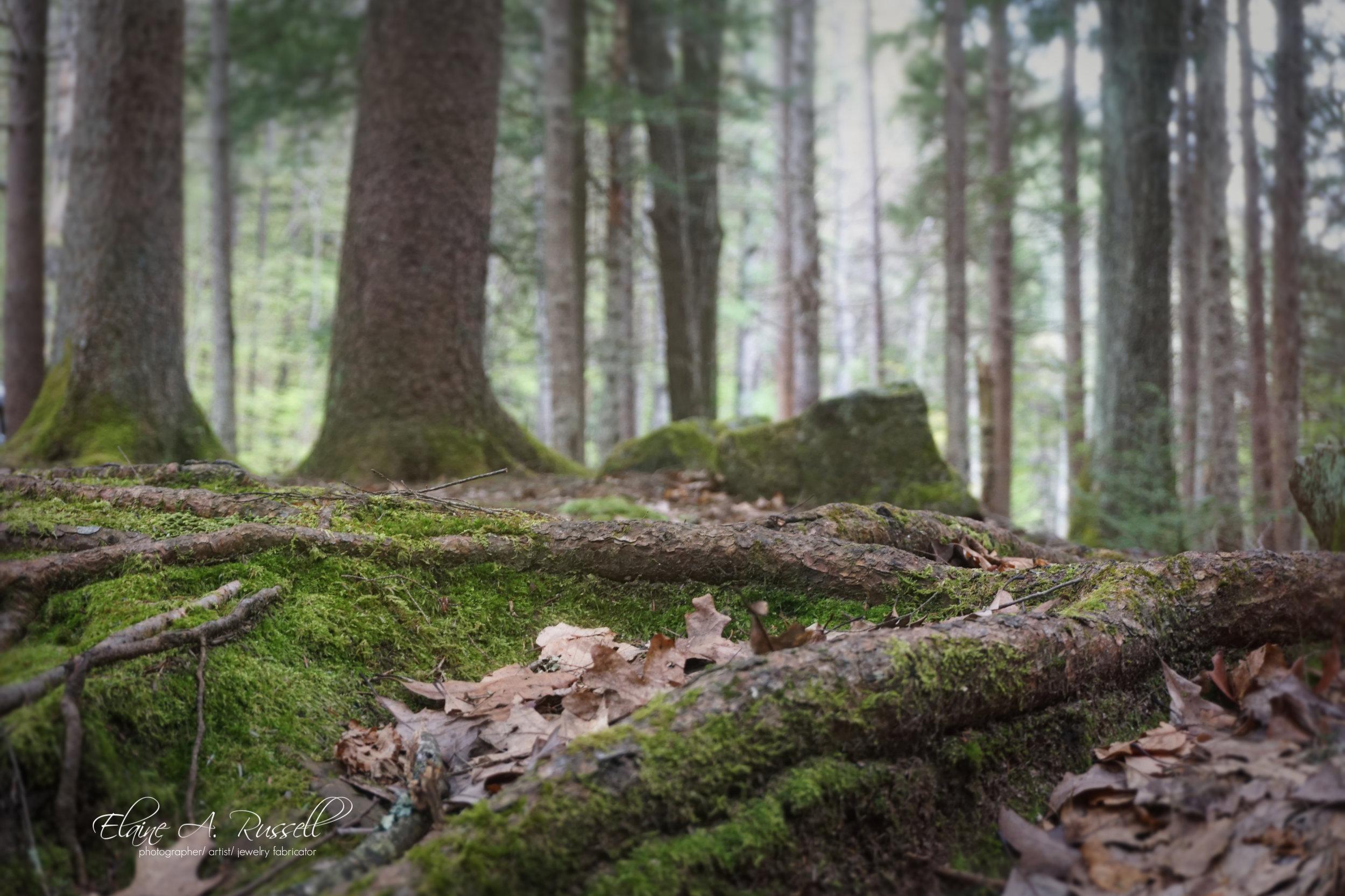 ForestFloor2.jpg