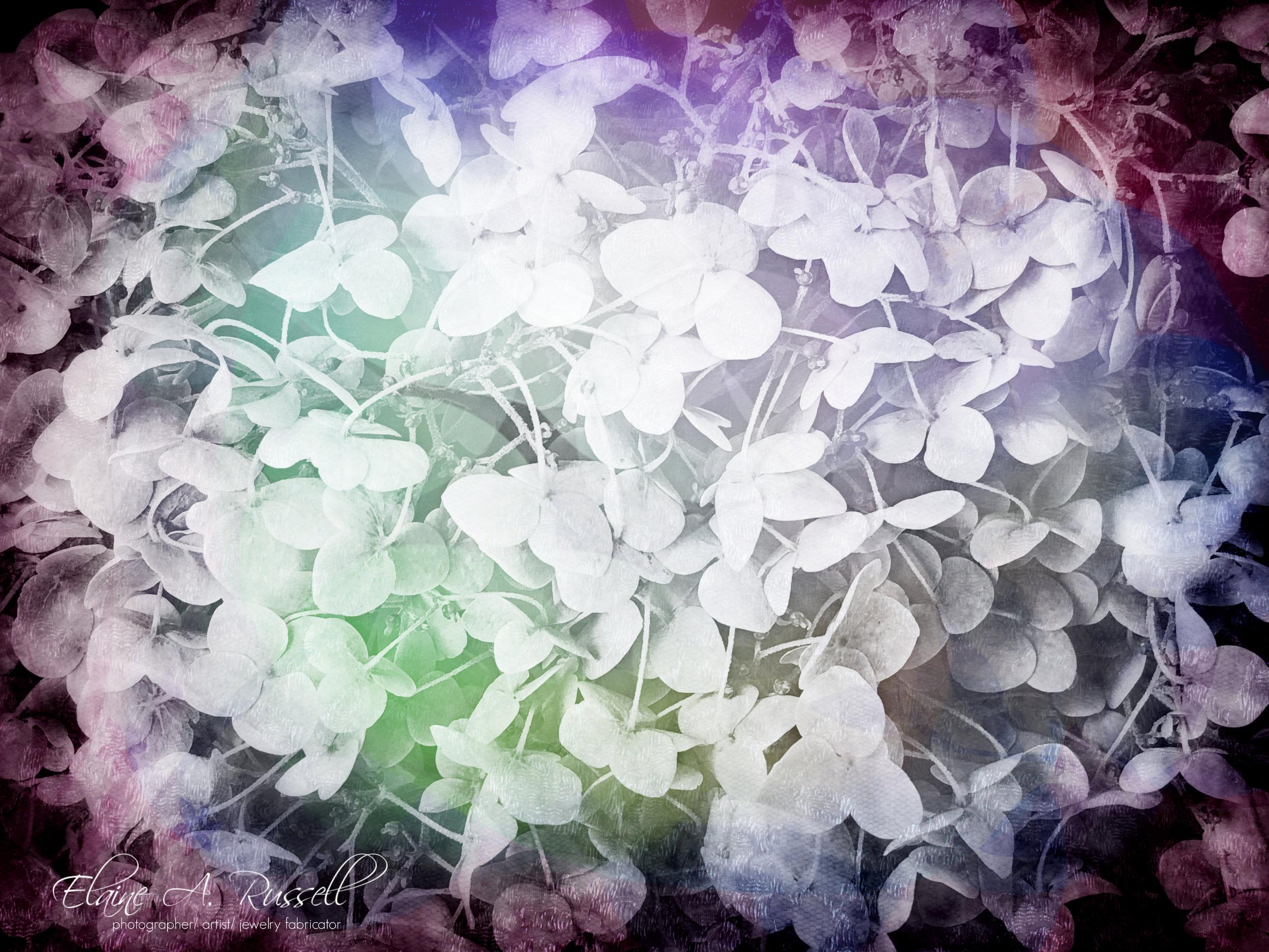 Hydrangeas2.jpg